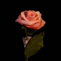 6 Rosellina Rosa