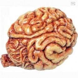 Cervello Lattice Grandezza Naturale