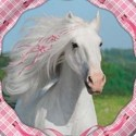 Party Cavallo