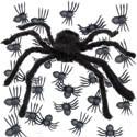 Animali Ragni e Ragnatele